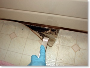 Mould Inspection Bc Testing Mould Inspector Remediation